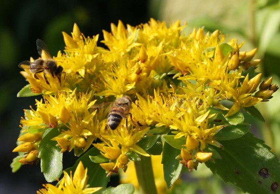 fleissige Bienchen1